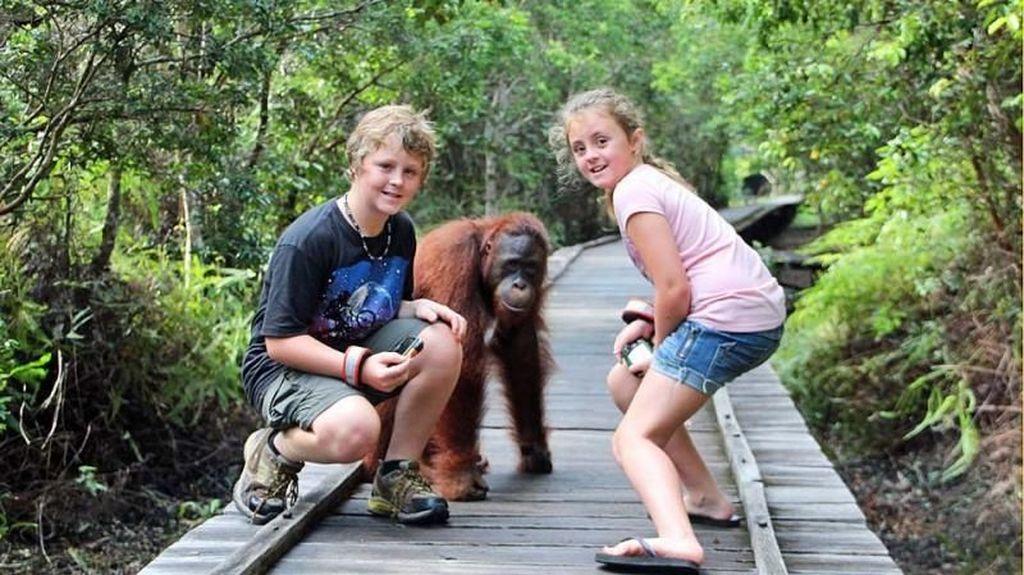 Perjalanan ke Tanjung Puting, Bertemu Orangutan