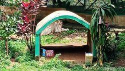 Harimau Buka Kado Tahun Baru Jadi Atraksi Favorit di Ragunan