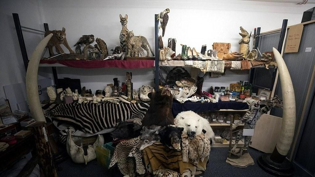 Foto: Aneka Produk Hewan Langka yang Disita di Bandara Heathrow London