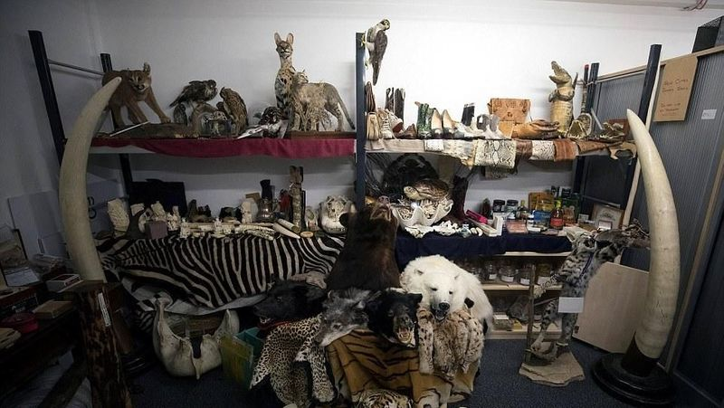 Bandara Heathrow di London, punya tempat penyimpanan barang sitaan yang terbuat dari hewan langka. Dari buaya yang diawetkan sampai gading gajah yang dilindungi (Reuters)