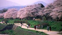 Cantiknya Kyoto yang Dicontoh untuk Kawasan Tanah Abang