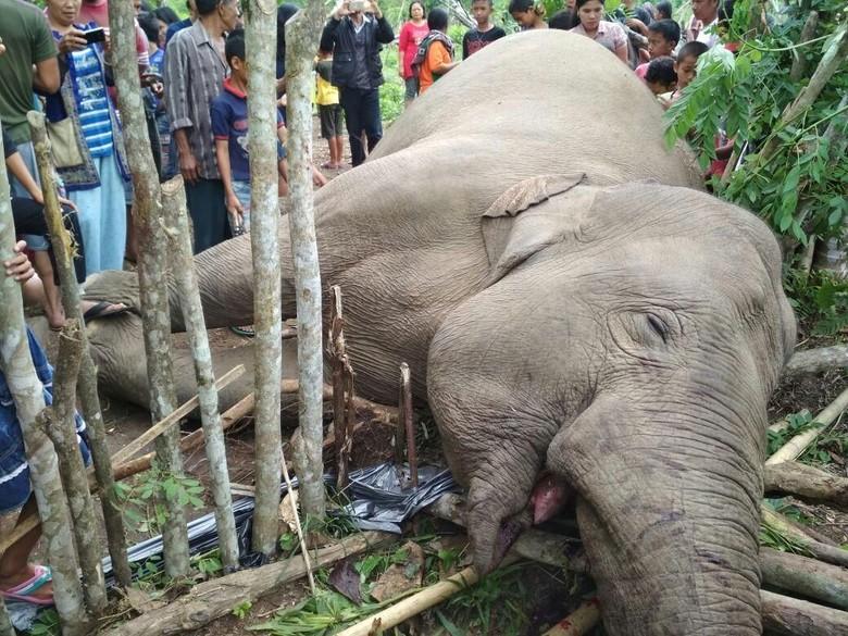 Download 95+ Gambar Gajah Yang Berdarah Paling Bagus HD