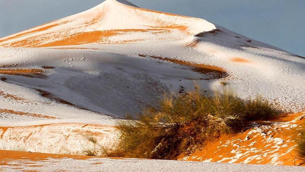 Gurun Sahara Tak Selalu Kering dan Bisa Ganti Iklim, tapi...