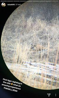 Saat Raisa Pertama Kali Melihat Harimau di Alam Liar