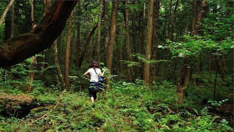 Hutan Aokigahara yang mencekam (BBC)