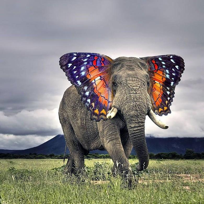 Butterphant, perpaduan gajah dengan kupu-kupu. (Foto: Boredpanda)