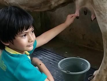 Lagi memerah susu sapi nih. (Foto: Instagram @kingfaazarafiqasli)