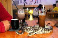 Minum Kopi di Kafe Ini Bisa Ditemani dengan Ular, Berani Nggak?