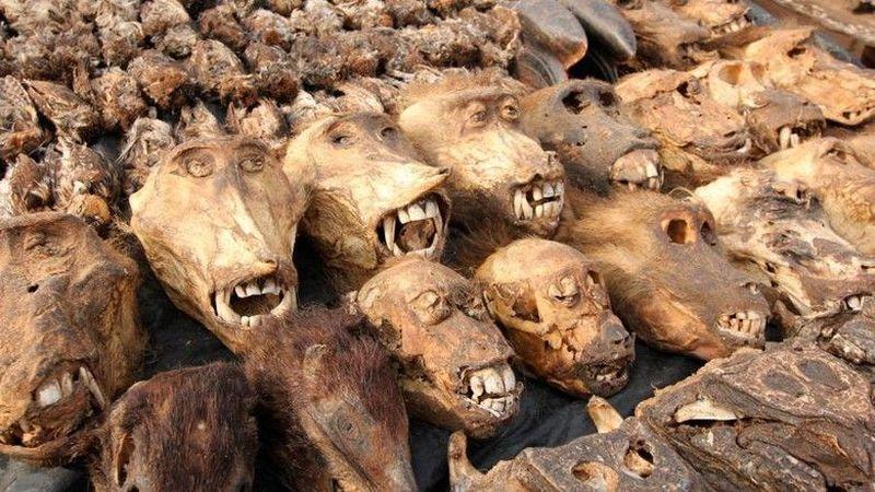 Pasar Voodoo Fetish atau Pasar Akodessewa merupakan pasar yang menjual barang-barang untuk ritual-ritual mistis, seperti jimat, tengkorak, boneka vodoo dan lainnya. Pasar ini berada di Togo, Afrika Barat. Di sini juga ada kaki gajah, jantung ukda, kepala leopard, dan obat-obat tradisional. (Thinkstock)