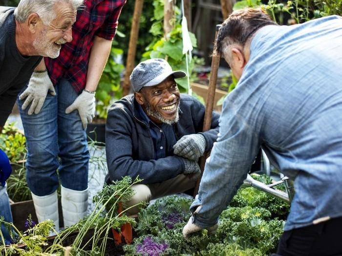 Studi menunjukkan bahwa berkebun bisa membuat pria lansia lebih sehat, terutama kesehatan mentalnya. Foto: Thinkstock