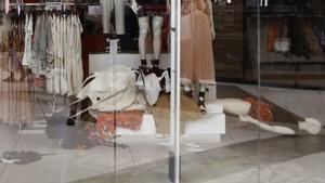 Gara-gara Foto Iklan Rasis, Toko H&M di Afrika Selatan Dihancurkan