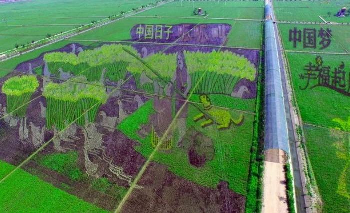 Sawah yang memukau ini bukan hasil karya alien atau peninggalan peradaban kuno. Ini adalah sawah yang dibuat dari tangan para petani Tiongkok sebagai salah satu area dari taman hiburan. Foto: Istimewa