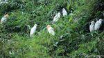 Rancabayawak, Surga Terakhir Kawanan Burung Blekok
