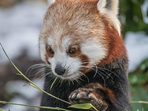 Foto: Bayi-bayi Hewan Lucu di Kebun Binatang Inggris