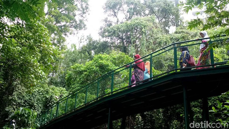 Foto: Bandung Punya Forest Walk Terpanjang di ASEAN (Mochamad Solehudin)