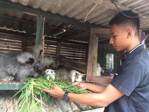 Kisah Aditya, Mahasiswa yang Biayai Kuliahnya dari Ternak Kelinci