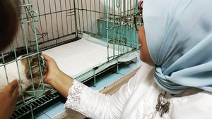 Istri Anies Kehilangan Loki Si Kucing: Forever in Our Hearts