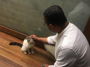 Cerita Anies Tentang Loki Si Kucing dari Bayi hingga Kematiannya