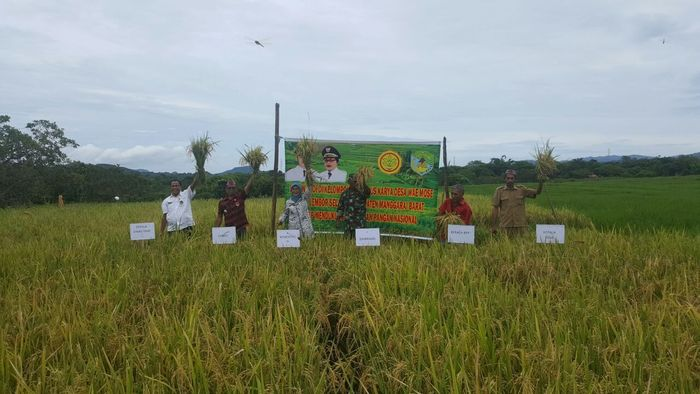 Foto: Panen di Kabupaten di NTT (Dok. Kementan)