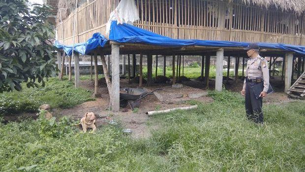 Lokasi kejadian dan 2 anjing pit bull yang menyerang Sarju