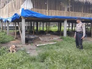 Serangan Pit Bull yang Memakan Korban di Malang dan Kediri