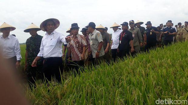 Mentan panen padi di Bojonegoro
