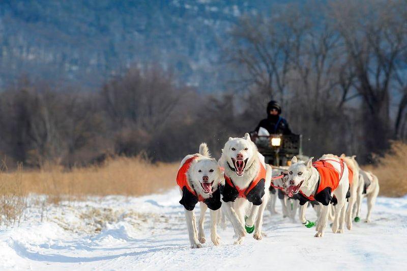 Perkenalkan, wanita ini bernama Marla Brodsky. Dia seorang musher profesional. (AFP)