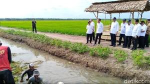 Ular Mungil dan Kaos Terbang Saat Jokowi Sambangi Banyuasin
