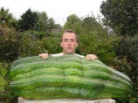 Keren! Petani 3 Generasi Ini Selalu Hasilkan Sayuran Raksasa Pemecah Rekor