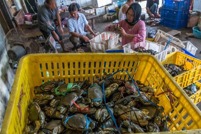 Pekerja menyortir kepiting di tempat pengepul, di Desa Gemulak, Sayung, Demak, Jawa Tengah, Senin (22/1). Aji Styawan/Antara Foto.