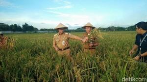 Anies: Ternyata di Jakarta Masih Ada Lebih dari  300 Hektar Sawah