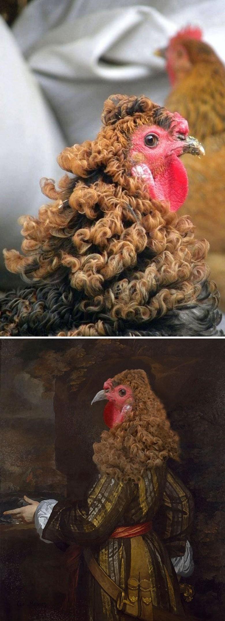 53+ Gambar Ayam Editan Lucu