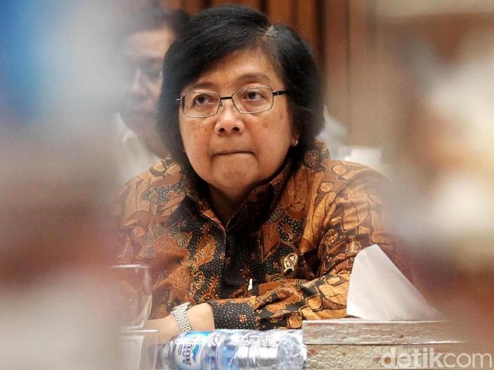 Menteri Lingkungan Hidup dan Kehutanan Siti Nurbaya dan DPR menggelar rapat membahas orangutan yang ditembak dan dipenggal di Kalimantan Tengah. Rapat digelar di gedung DPR, Jakarta, Rabu (24/1/2018).