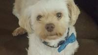 Crazy Rich Banget Nih, Bela-belain Borong Tiket Kelas Bisnis Buat Anjing