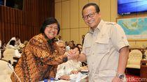 Menteri LHK-DPR Bahas Orangutan yang Ditembak dan Dipenggal di Kalteng