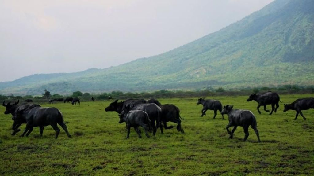 Terpesona Afrika di Taman Nasional Baluran