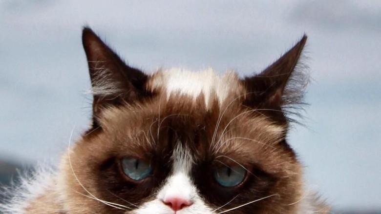 Kucing Judes yang Viral di Medsos Ini Menang Gugatan Rp 9,4 M