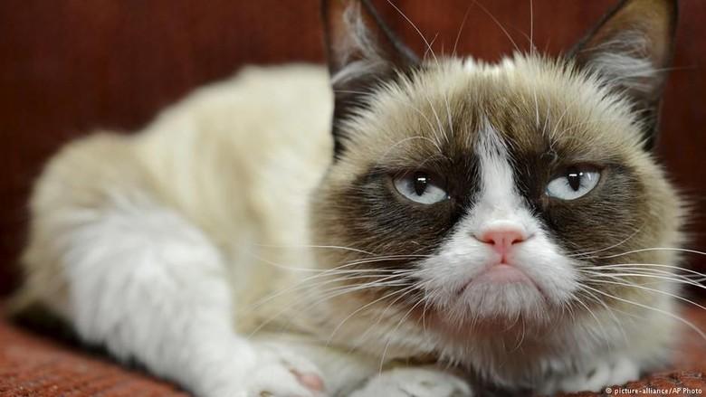 Menang Gugatan, Kucing Judes Ini Dapat Ganti Rugi Rp 9,4 Miliar
