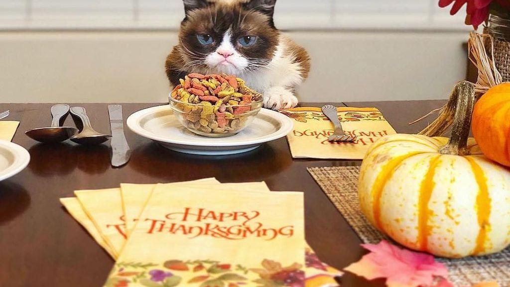 Wow, Grumpy Cat Kini Jadi Kucing Terkaya di Dunia!