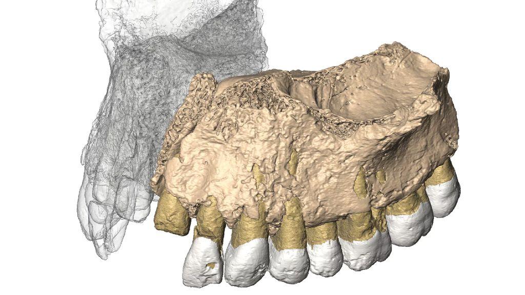 Fosil Berusia 200 Ribu Tahun Ditemukan di Israel