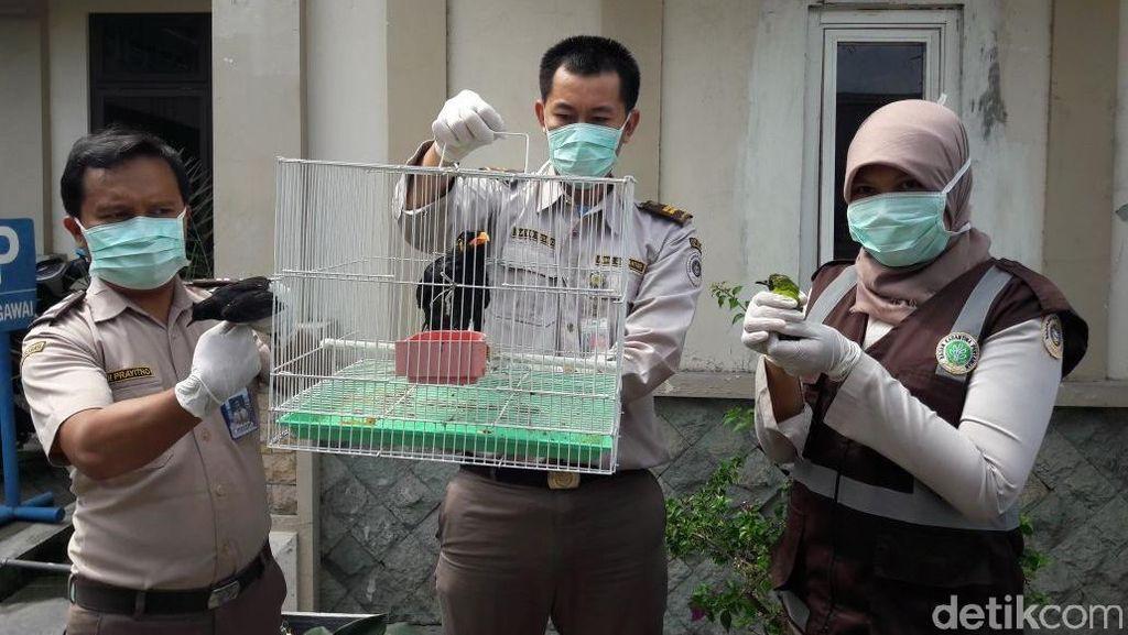 Penyelundupan Ratusan Burung Dilindungi Berhasil Digagalkan