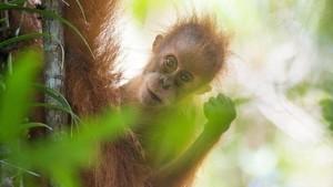 5 Spesies Baru Indonesia Punya Nama Unik, Termasuk Nama Terkait Ahok