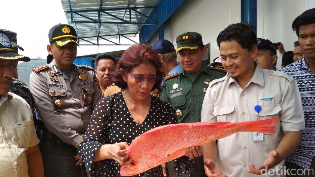 Ajak Makan Ikan, Susi: Daging Mahal dan Impor