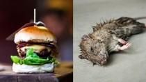 Hiiii, Pria Ini Temukan Tikus Kecil Berbulu dalam Sajian Burgernya