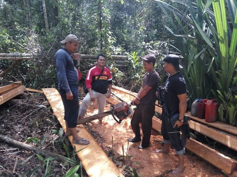 Polisi Tangkap 6 Pelaku Illegal Logging di Kawasan Cagar Biosfer Riau