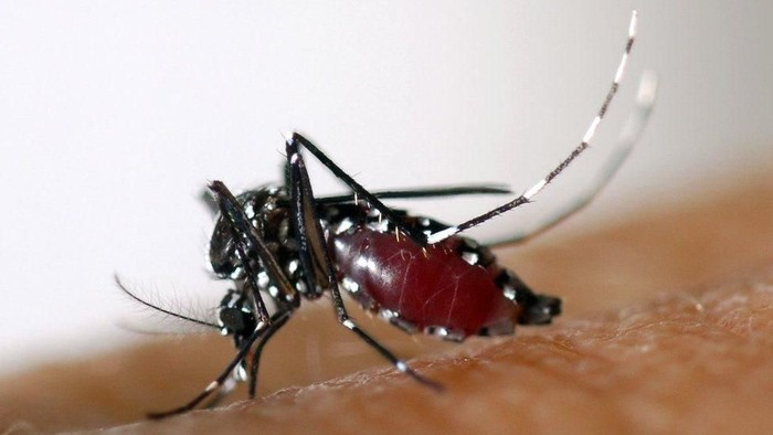 Tanda-tanda terjangkit demam berdarah dengue. Foto: BBC Magazine