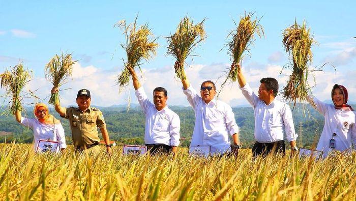 Foto: Mentan Amran Sulaiman menggelar panen raya padi di Garut (Dok. Kementan)