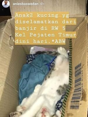 Saat Anies Posting Anak Kucing yang Diselamatkan dari Banjir