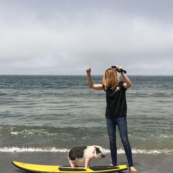 Pickles dan Maddie bisa menghabiskan waktu seharian di pantai. Maddie mengajari babi imut ini main surfing sampai dia bisa. (Instagram/@livingwithpickles)