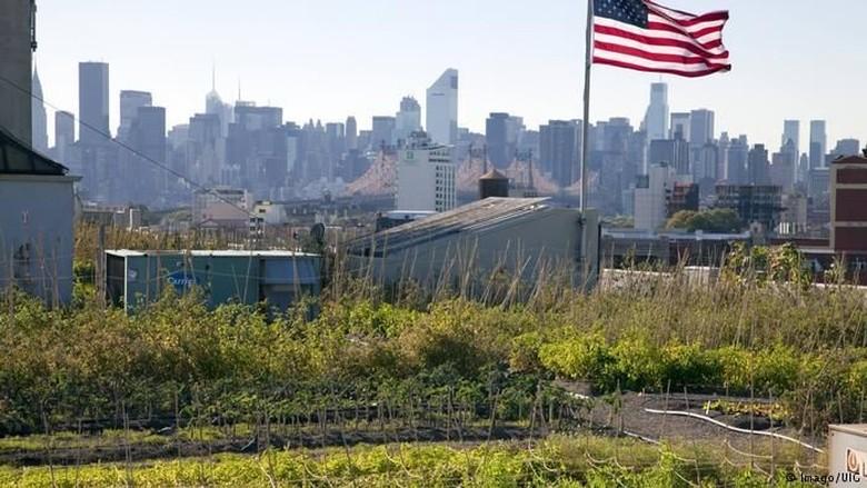 Kebun Vertikal Solusi Jitu Perbaiki Kualitas Udara Perkotaan